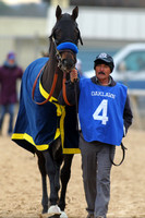 Oaklawn Smarty Jones Stakes 1-18-2016 (©Justin Manning) JWM_(0061